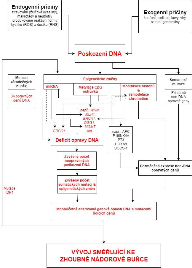 Kancerogeneze (7) (2).fb2